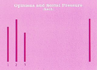opinions and social pressure essay