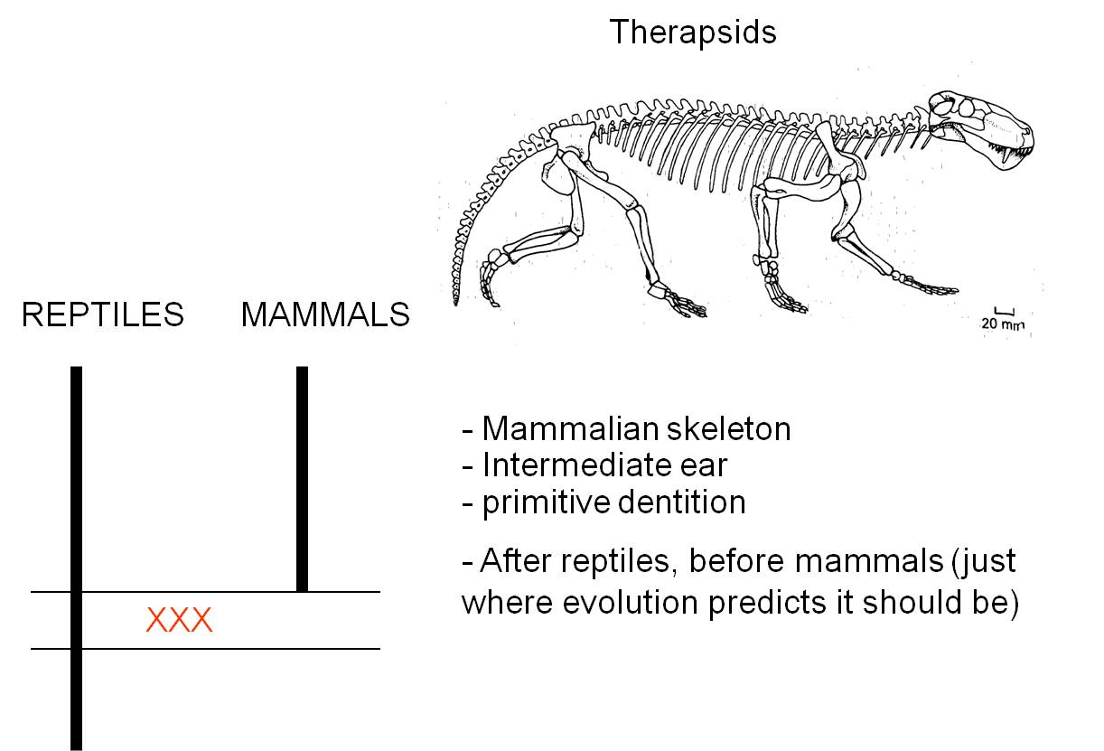 A look at transitions of reptiles to mammals
