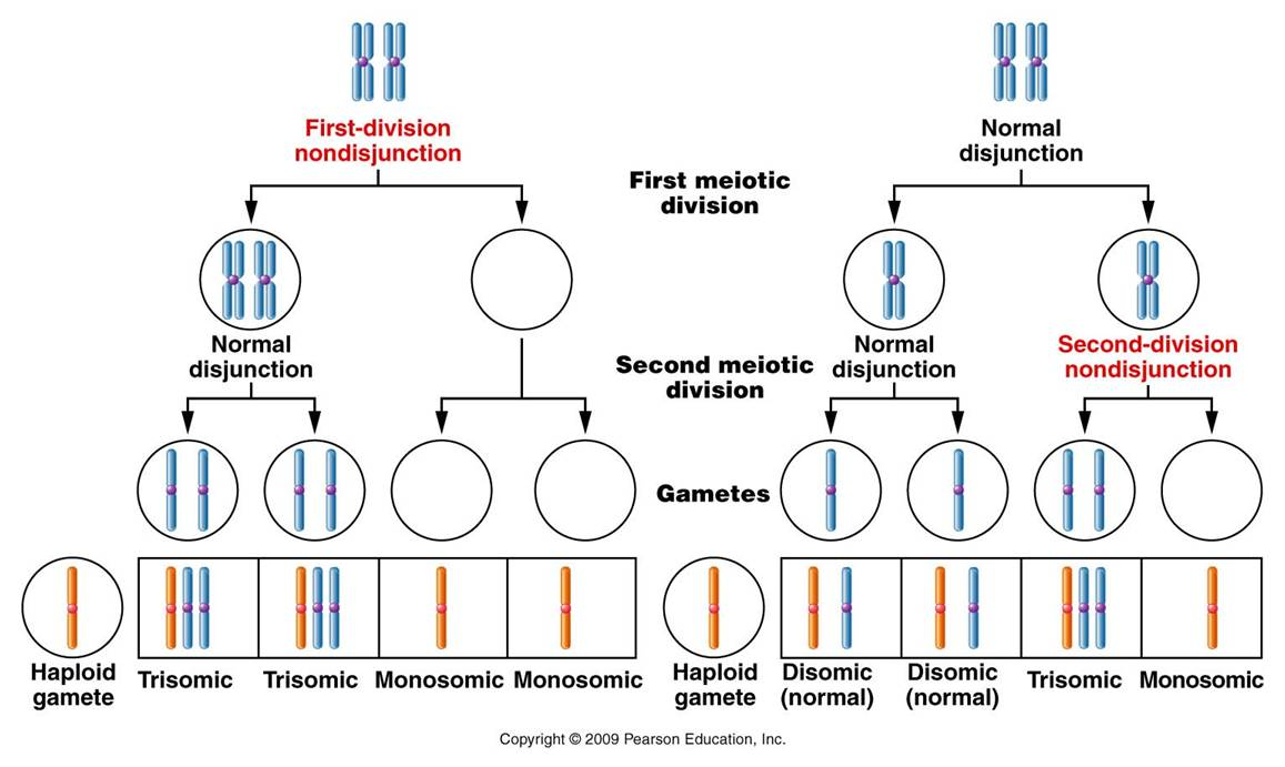 is called aneuploidy